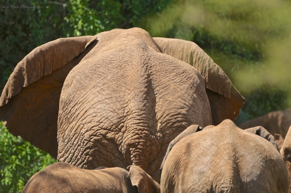 Elephants in Samburu National Park