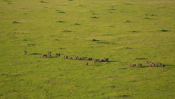 elephants and termite mounds from hot air balloon in Masai Mara