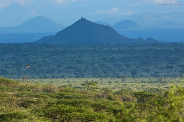 Savanna in Samburu National Park