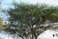 6-Weaver nests81