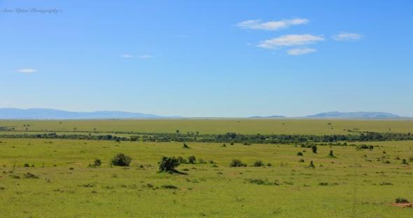 Grassland at entrance of Masai Mara
