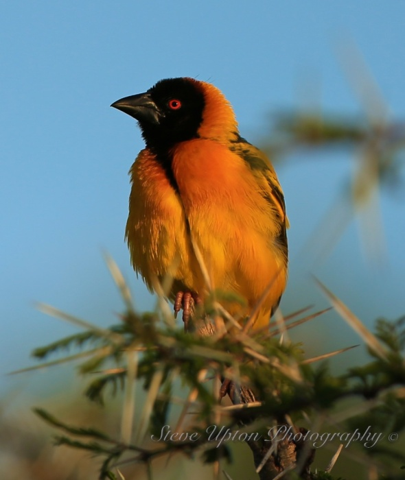 bird vertical207