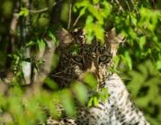 leopard's eyes 3197