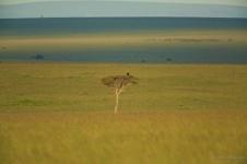 Masai Mara grasslands